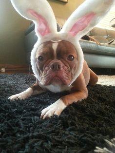 Daisy's failed Cadbury Bunny Audition.