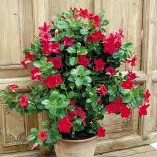 Garden, Plants, Blog, Outdoors, Decoration, Tape, Floral Arrangements, Flowers, Lawn And Garden