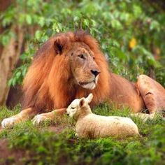 One day the Lion and the Lamb will lay down together. There will be no more death!