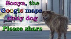 Lonely, Abandoned Dog Rescued Thanks to Google Street View