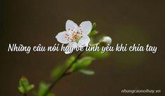 Những câu nói hay về tình yêu khi chia tay Plants, Planters, Plant, Planting, Planets