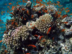 Coral in the northern Red Sea are not only beating the heat  — they're thriving in it.