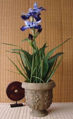 ber ideen zu lila pflanzen auf pinterest vorg rten landschaftsbau und landschaftsbau. Black Bedroom Furniture Sets. Home Design Ideas