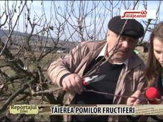 REPORTAJUL ZILEI TAIEREA POMILOR FRUCTIFERI - YouTube Growing Plants, Fruit Trees, Grape Vines, Youtube, Merlin, Gardening, Agriculture, Plant, Vineyard Vines