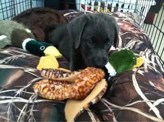 looks like remington same bed same ducks haha!!! cant wait to get him out in the water!!!