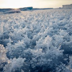 Photo by @nickcobbing Heres a carpet of frost flowers from the Arctic sea ice. These frost flowers are a common feature that tend to grow on new thin sea ice under cold and calm conditions. Brine freezes into the delicate crystals of the flowers. The formation and role of the frost flowers is still not completely understood and scientists are keen to research them further particularly how they release sea salt aerosol into the atmosphere. This picture was taken whilst on assignment for…