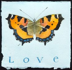 Small Tortoiseshell Butterfly - Love by Gabby MALPAS   PLATFORMstore   Watercolour and pencil on Arches paper