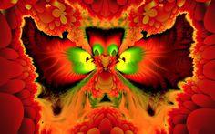phoenix bird hd pictures