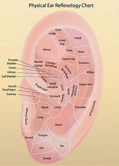 EAR REFLEXOLOGY CHARTS - Tips for recognizing a good reflexology ear chart!