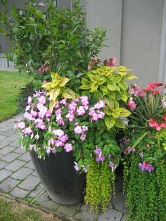 patio flower pots - Bing Images