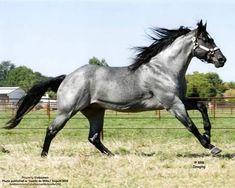 Cute Horses, Pretty Horses, Horse Love, Andalusian Horse, Friesian Horse, Arabian Horses, Black Horses, Wild Horses, American Quarter Horse