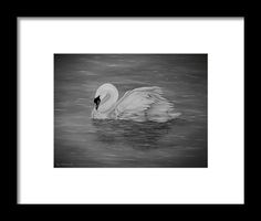 Swan Framed Print featuring the drawing Lone Swan by Faye Anastasopoulou Ocean Scenes, My Themes, Frame Shop, Farm Life, Artist At Work, Framed Art Prints, Clear Acrylic, Lonely, Swan