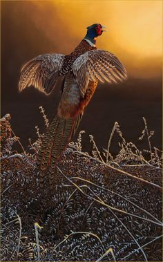 'Frosty Start'- Pheasant Painting