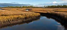 florida marsh photography - Google Search