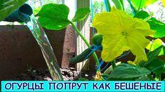 Vegetable Garden, The Creator, Vegetables, Plants, Youtube, Gardening, Veg Garden, Home Vegetable Garden, Vegetable Gardening