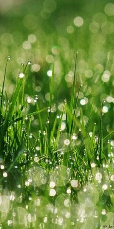 Morning dew. The grace & Favour of God n the outpouring of the Holy Spirit. Genesis 27:8, Deuteronomy 32:2, psalm133: 3 , proverbs 19:12