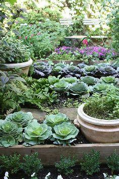 Narrow raised-bed kitchen garden