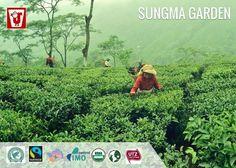 #Sungma #Tea #Garden