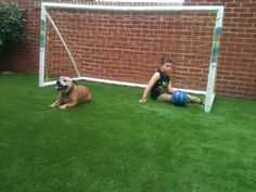 Fantastic surface for playing football and pet friendly too. Landscape Services, Somerset, Outdoor Living, Sketches, Pets, Nature, Grass, Surface, Football