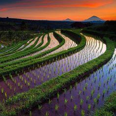 Jatiluwih Rice Terrace, Tabanan - Bali