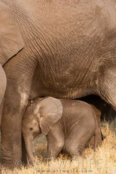 Baby elephants are among the sweetest things on earth...