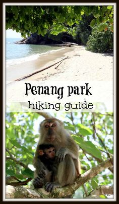 Two day hike in Penang National park, George Town, Malaysia. Map, how to get by public transport, where to camp, what to pack for the hike, two day itinerary, best beaches, monkeys, Penang park hiking tips and ideas.