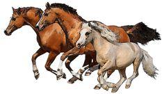 Clip Art of Horses: Three Horses Running