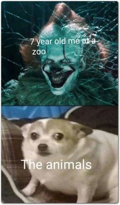 25 Hilarious Humpday Memes Cheers To Getting Us Through the .- 25 Hilarious Humpday Memes Cheers To Getting Us Through the Week - Funny Disney Memes, Crazy Funny Memes, Funny Animal Memes, Stupid Funny Memes, Cute Funny Animals, Funny Relatable Memes, Funny Dogs, Funny Humor, Funny Quotes