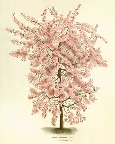 Wisteria antique Botanical Art Prints Victorian by AntiqueWallArt