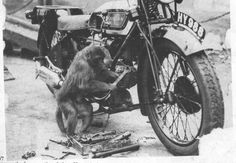 Moto and monkey Vintage Bikes, Vintage Motorcycles, Cars Motorcycles, European Motorcycles, Bmx Bikes, Bobbers, Cx500 Cafe, Husky, Ride Out