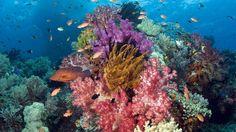 Beautiful Underwater Life