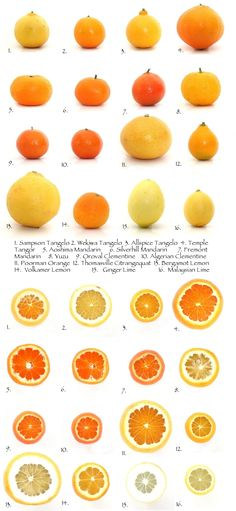 The fascinating world of citrus fruits
