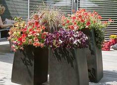 Pflanztipp für Balkon und Terrasse im Sommer: der richtige Standort