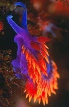Nudibranch by karyn
