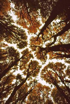 autumn trees from below | via: bekuh b.