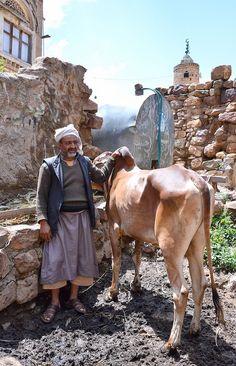 Farmer and Bull, Yemen