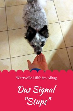 """Valuable help in everyday life: the signal """"nudge"""" ~ your way with your dog - The hand target offers one exercise and many possible uses. training The hand target offers on - Pet Dogs, Pets, Dog Cat, Pet Health, Dog Training, Training Tips, Animal Photography, Pet Care, Dog Love"""