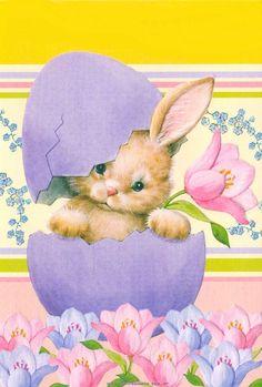 Conejos: