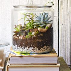 succulents in a cookie jar