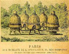 Gravure ancienne de rucher
