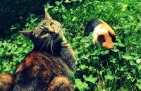/album/nejroztomilejsi1/a20-harmonie-sveta-zvirat-jpg1/ Album, Cats, Photography, Animals, Gatos, Photograph, Animales, Kitty Cats, Animaux