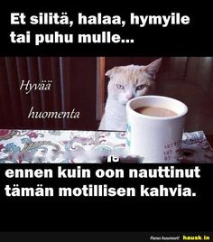 Et silitä, halaa, hymyile tai puhu mulle. Good Night, Good Morning, Cats And Kittens, Happy Birthday, Memes, Quotes, Coffee, Nature, Life