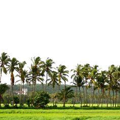 #Goa #India