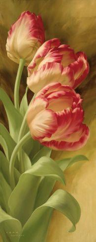Spring's Parrot Tulip I
