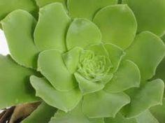 Guía de Cactus y Crasas