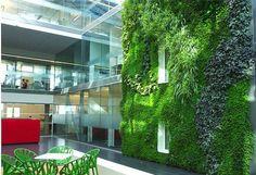 Betonlaşan Hayata Başkaldırı Dikey Bahçeler… #dekorasyon