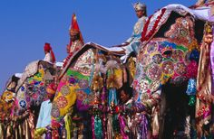 Elephants Mahouts At Elephant Festival Stock Photo 148847102