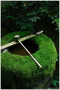 Mossy Chozu-bachi of Daitoku-ji temple, Kyoto, Japan - Chozu-bachi 手水鉢 is a vessel originally designed to keep water for rinsing one's mouth and cleansing one's body before entering the sacred precincts of a Shinto shrine or a Buddhist temple in Japan.