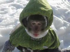 Funny Monkey Sees Snow for the First Time ...cutest thing hopping around in its little snowsuit...