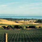 Wine regions of New Zealand - posted by Hideaways International